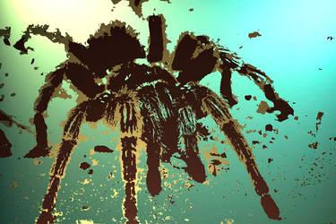 Tarantula by Everling