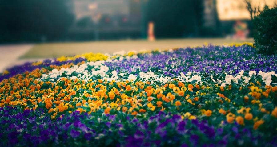 Not-so-winter Garden2 by Miles-Sinclair