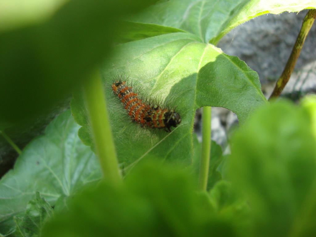 Orange Caterpillar by SuperMetroid2