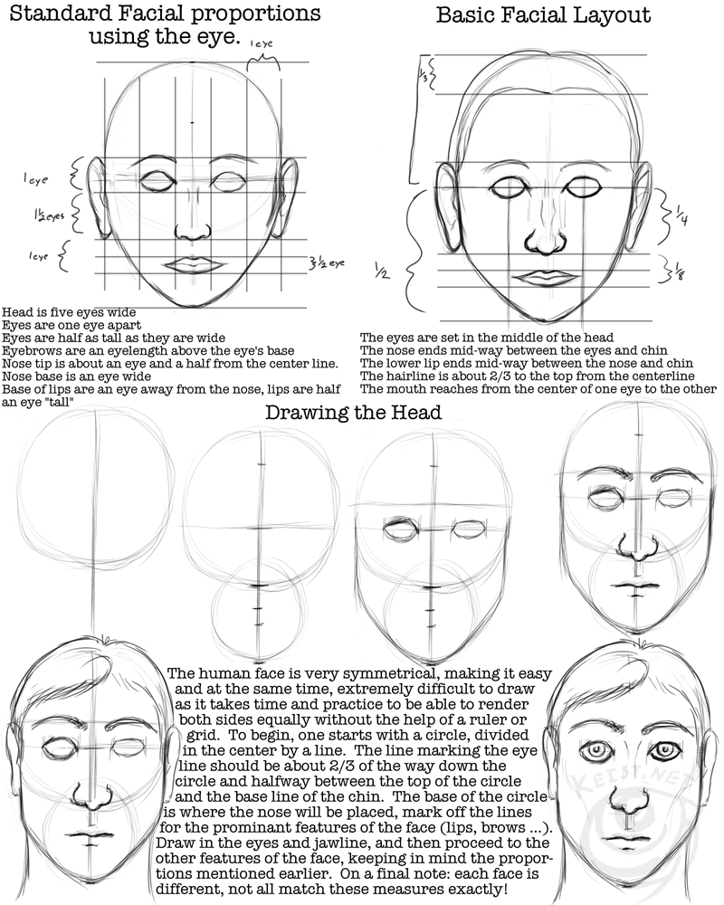 how to draw people proportions