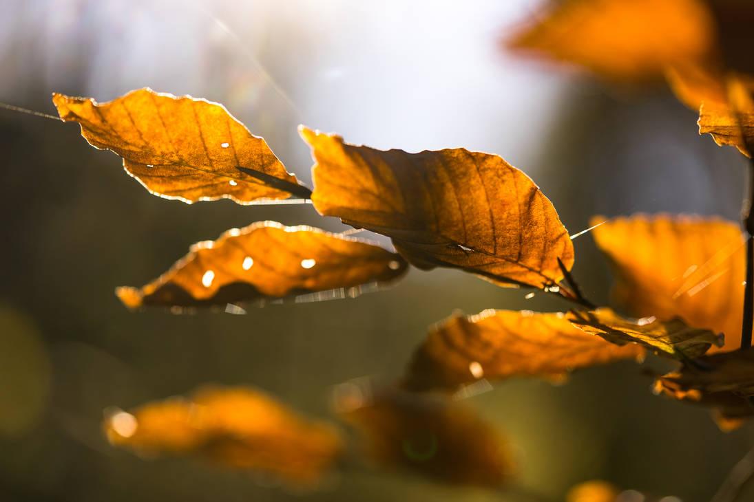 Golden autumn by Akxiv