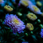 Colorful Flower by Akxiv
