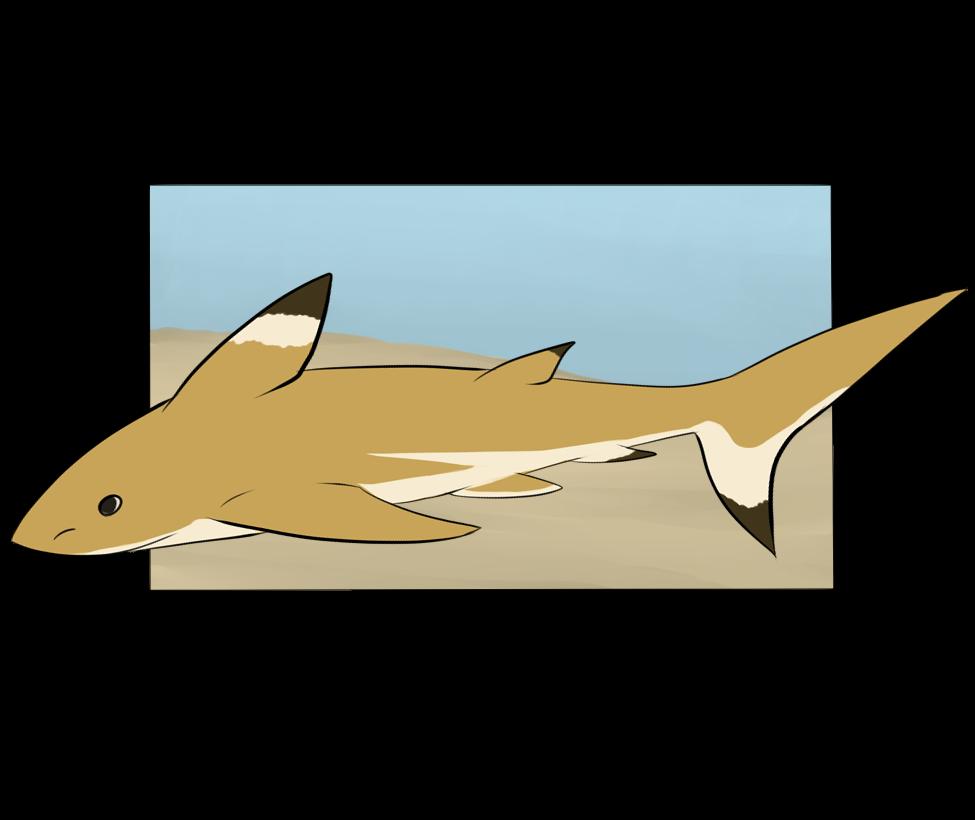 Botanica Zoo    Blacktip Shark    Sabastian by LadyPipen