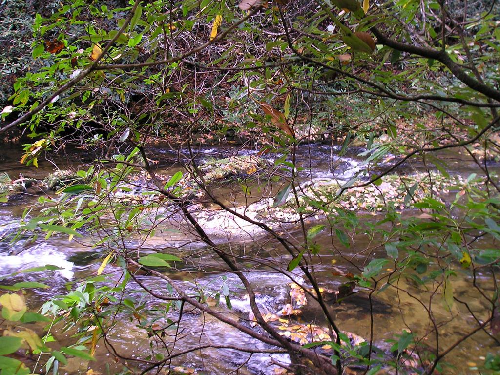 Harper's Creek, Colettsville, NC by Sailorcritter
