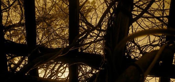 http://fc06.deviantart.com/fs41/i/2009/004/8/b/Binding_by_tomtom0919.jpg