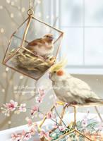 C.:Spring:. by Aviaku