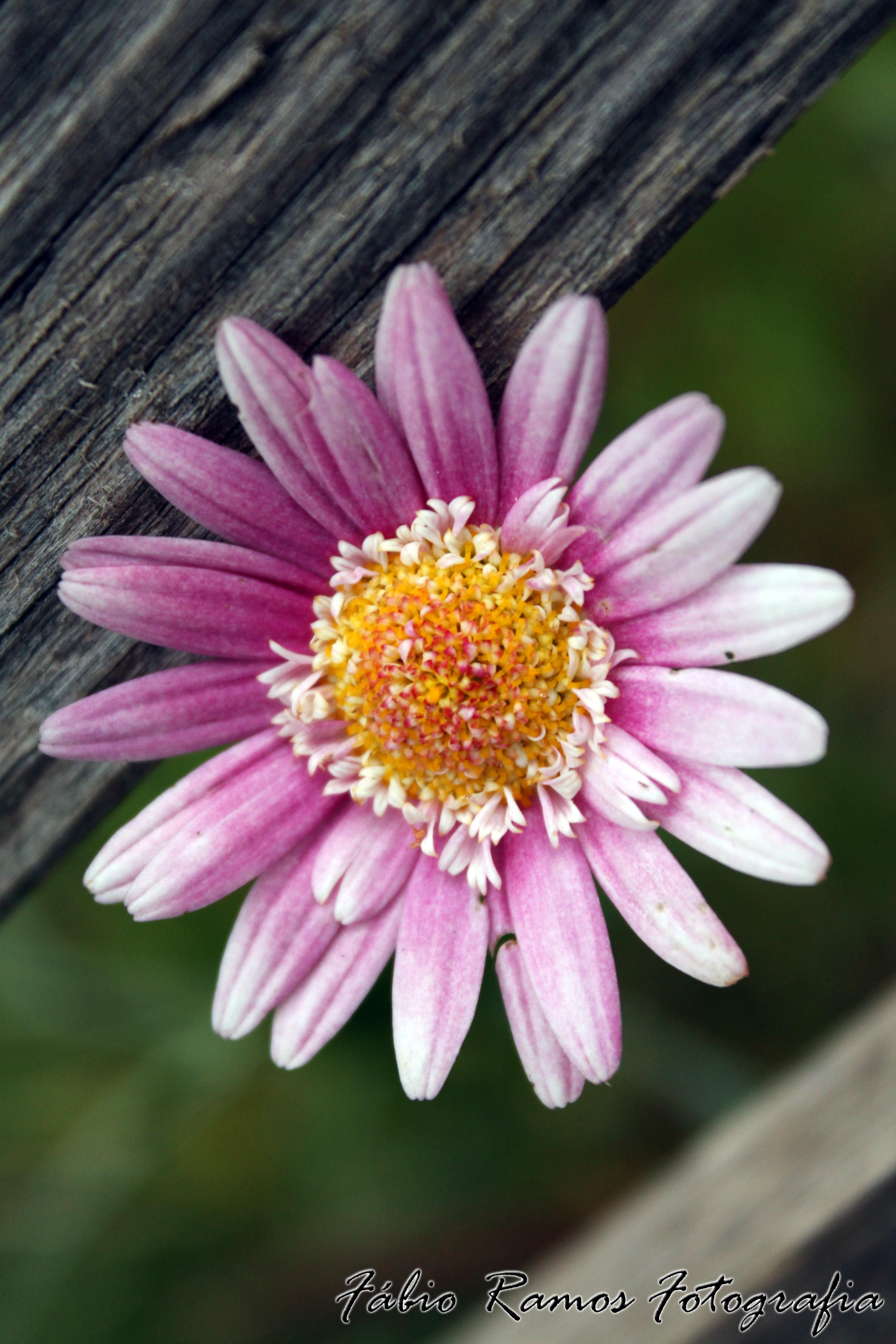 My Little Flower by moguinho on DeviantArt
