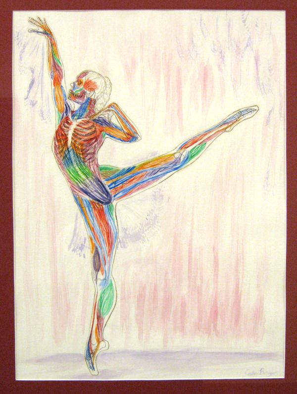 Anatomy Of A Dancer By Cassie Berringer On Deviantart