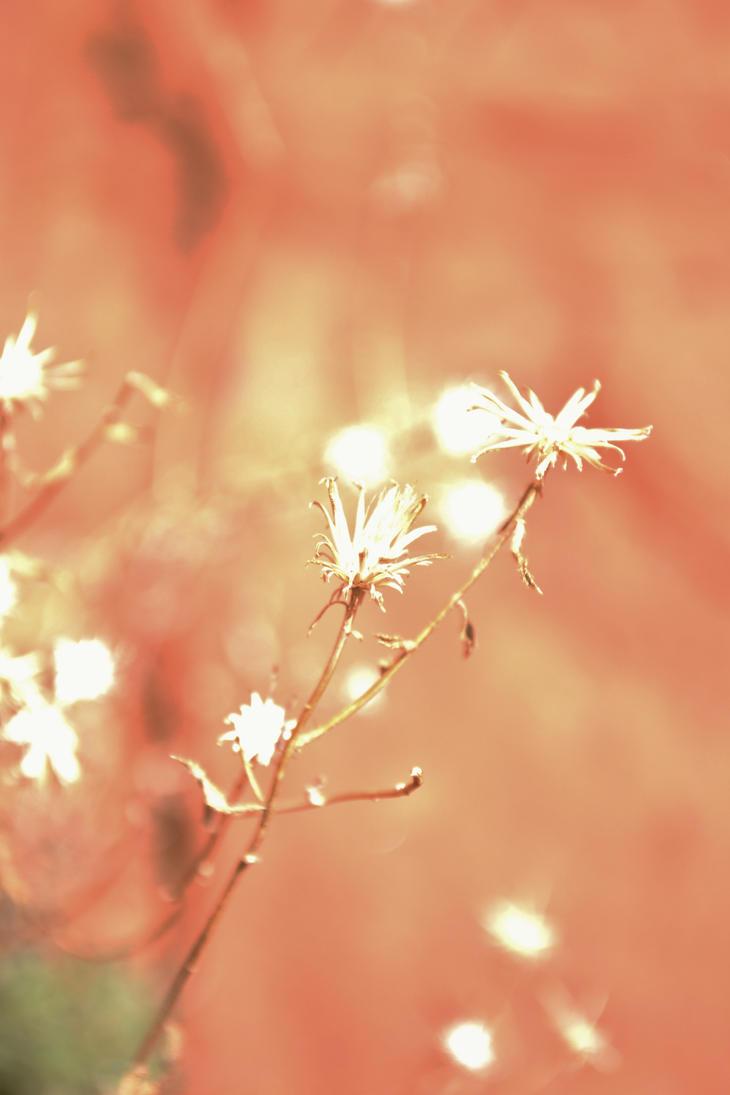 Desert Flowers by MariahEAM