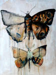 Entomology series: 1- MOTHS