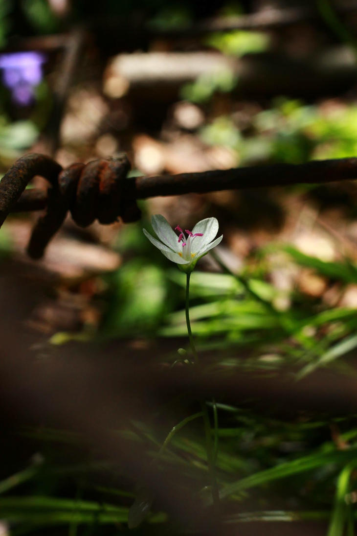 Spring! by Kitten--Mittens