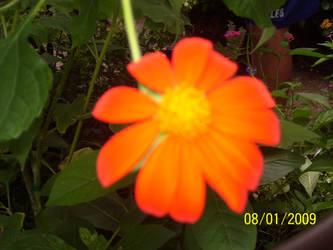 Orange delight by bloodlust2010