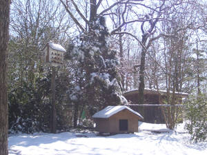 snow covered dog house 2