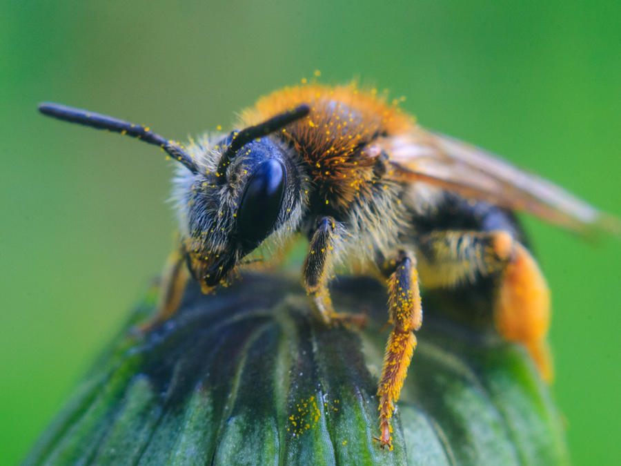 Bee by agriskalnins