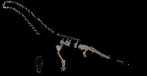 Wintonotitan schematic by Megalotitan