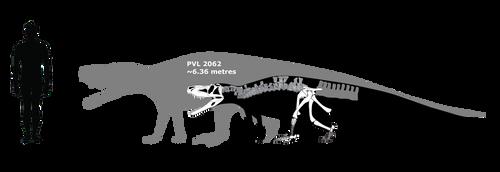 Saurosuchus schematic by Megalotitan