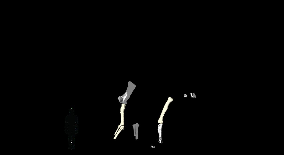 Aegyptosaurus schematic by Megalotitan