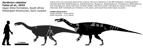 Aardonyx schematic by Megalotitan