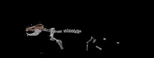 Tritylodon schematic