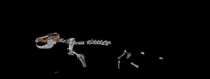 Tritylodon schematic by Megalotitan