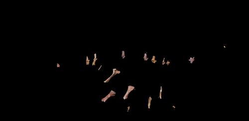 Pulanesaura schematic