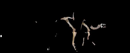 Tanius sinensis schematic