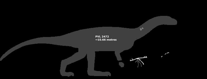 Sillosuchus schematic