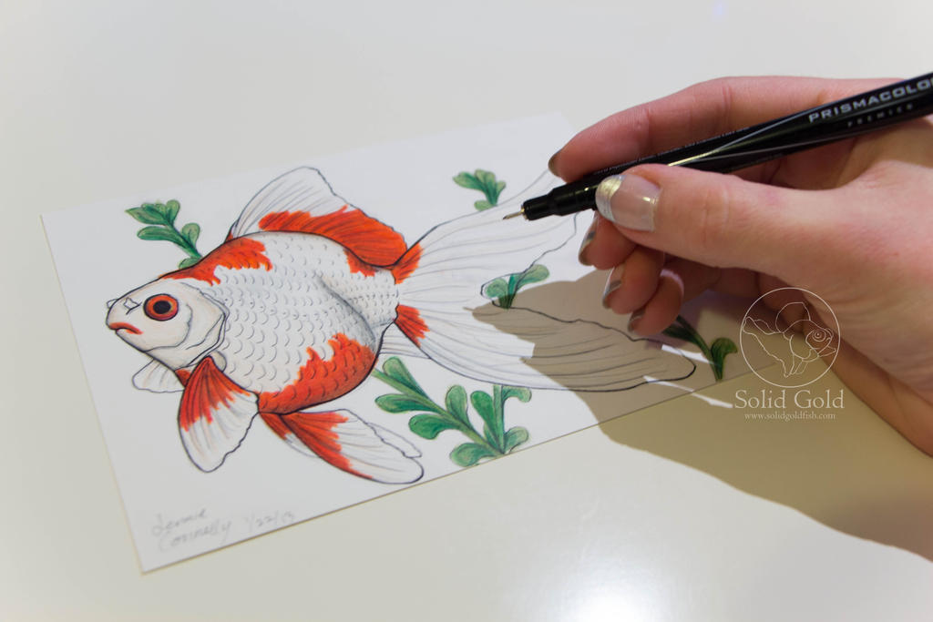 tamasaba goldfish drawing by jennieconnelly
