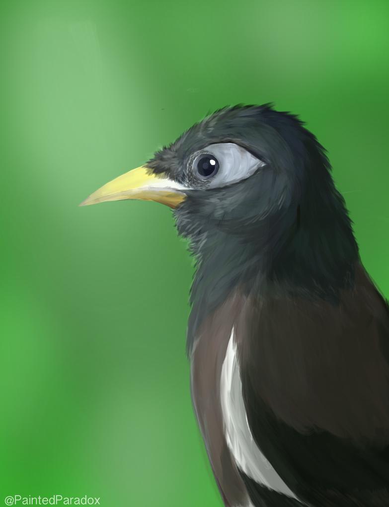 Mynah Bird by AzureTheCat808