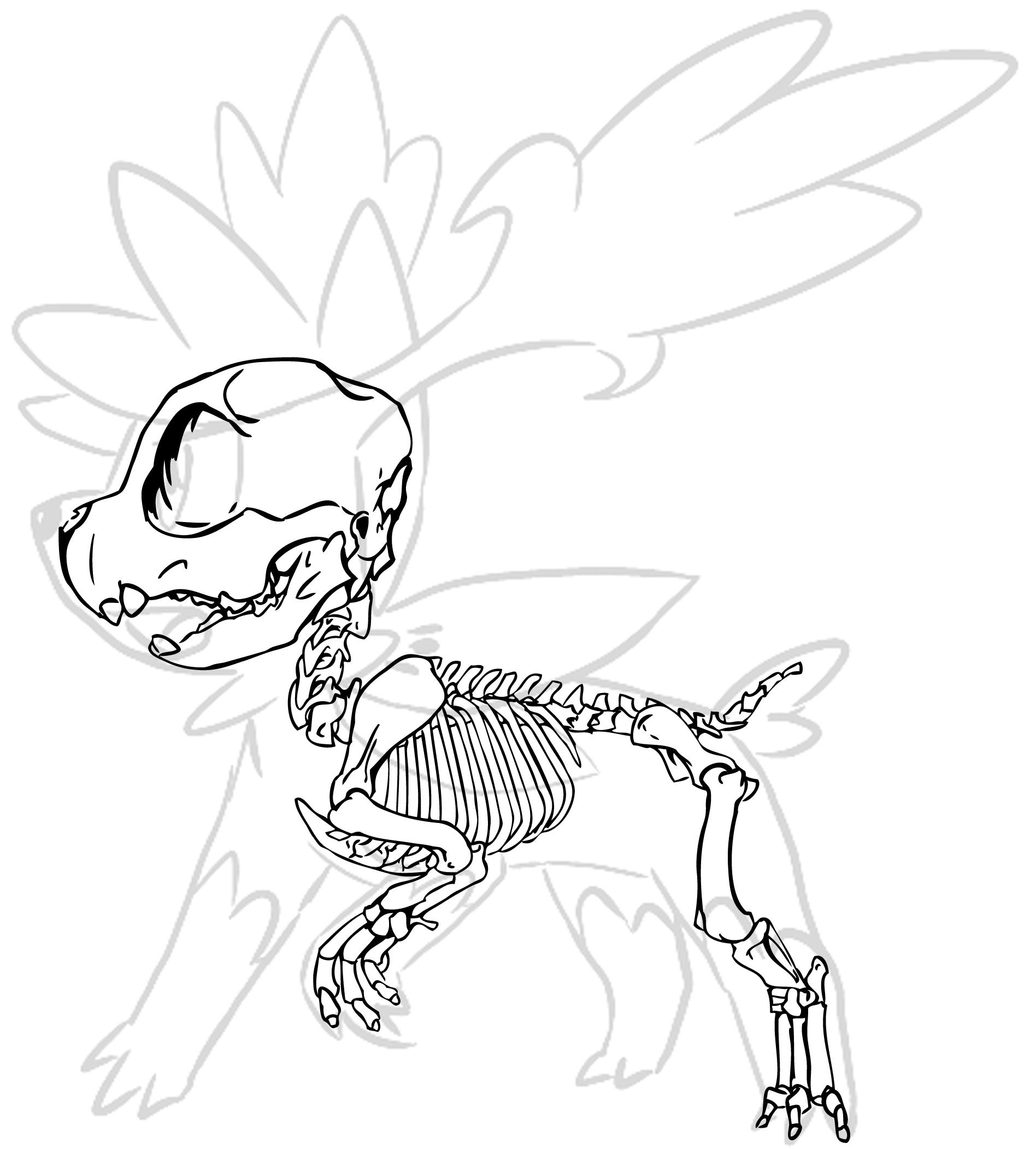 Some Pokemon Skeletons - The PokéCommunity Forums
