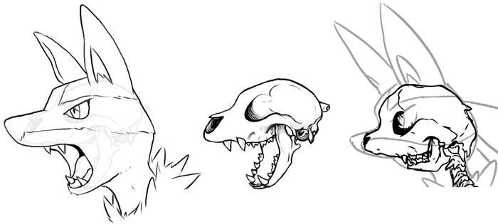 Lucario - Skull Study