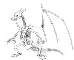 Charizard Skeleton v2