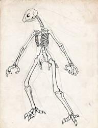 Blaziken Skeleton