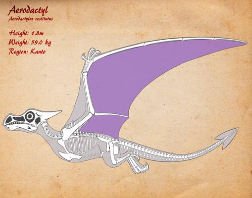Aerodactyl Skeleton