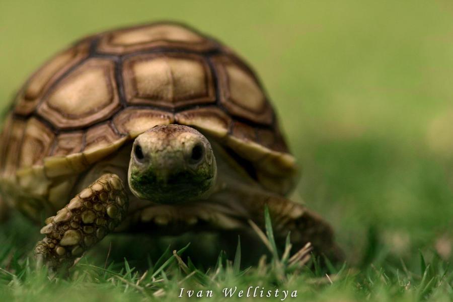 Turtle by dahui98