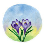 Crocus flowers by aileensea
