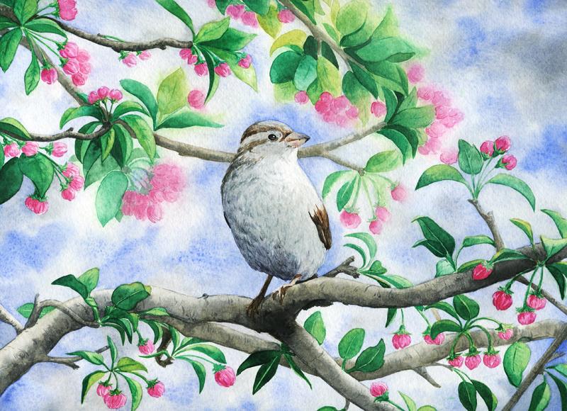 Little bird by aileensea