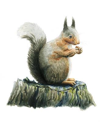 Squirrel's breakfast by aileensea