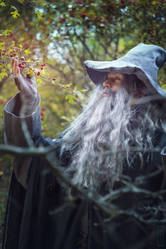 The Lord of the Rings :Gandalf
