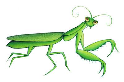 Mantis by Handela