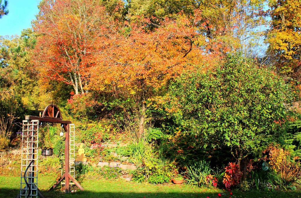 autumn2015_my garden8 by ethnonaut