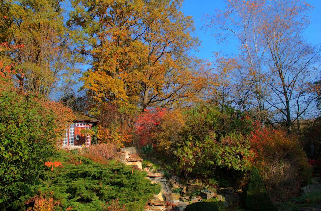autumn2015_my garden9 by ethnonaut