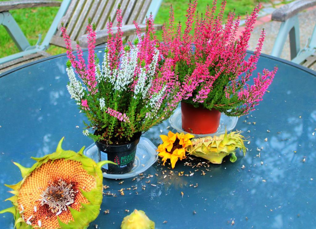 autumn2015_my garden10 by ethnonaut