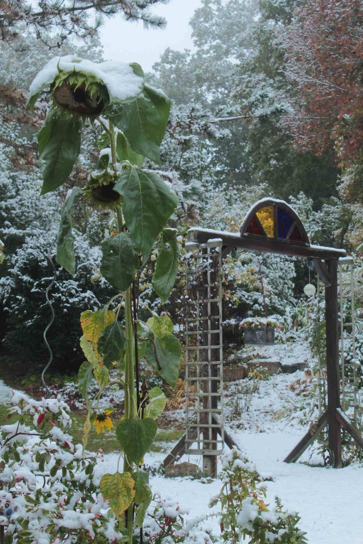autumn2015_my garden12 by ethnonaut