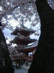 japan by Heidi3