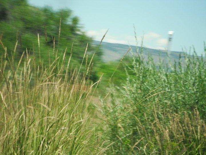 Grass Rushing By by KuteKennie
