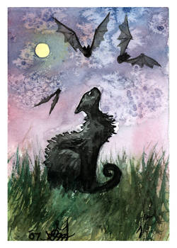 Batty Cat