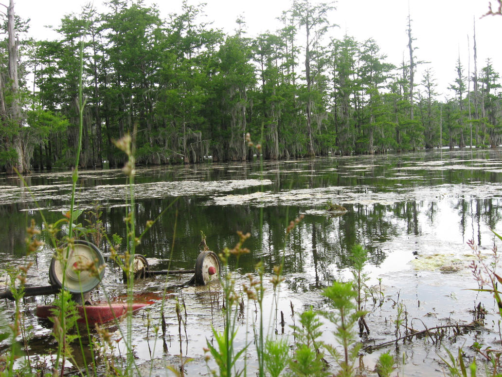 Great dismal swamp animals