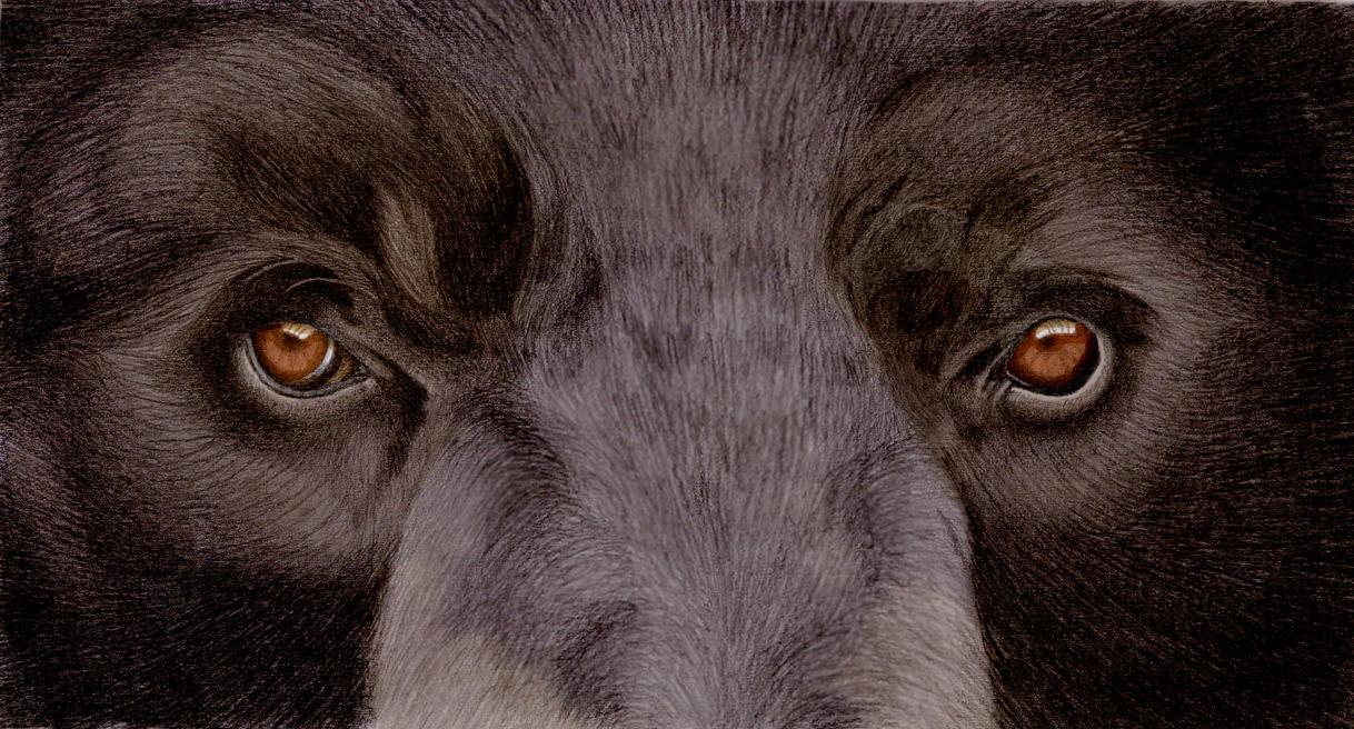 Black Bear by rachels89