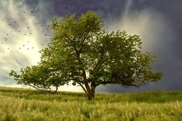 Tree of life by wtamas